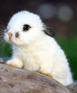 Жизнь зайцев в природе: где прячутся, почему носят «белые штанишки», как готовятся к холодам осенью