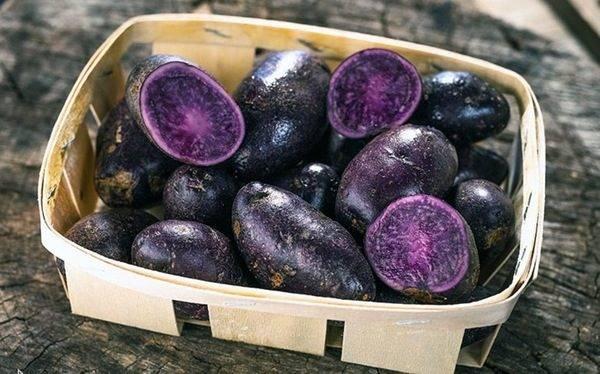 Фиолетовый картофель: полезные свойства и вред для организма синей картошки, чем отличается от красной и белой, как применять в кулинарии и народной медицине?