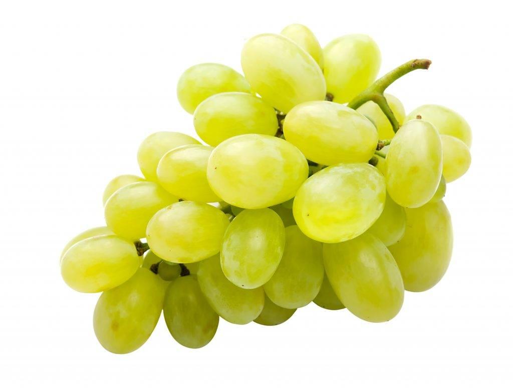 Виноград зарница: что нужно знать о нем, описание сорта, отзывы