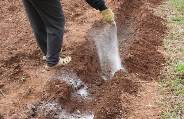 Удобрение картофеля: подкормки, внесение при посадке весной и осенью