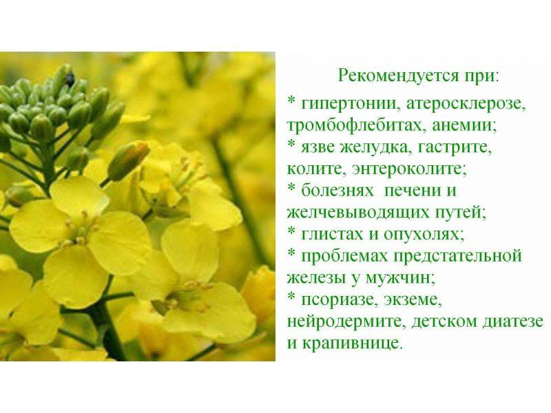 Рыжиковое масло - что это, полезные свойства, польза и вред, как принимать и противопоказания