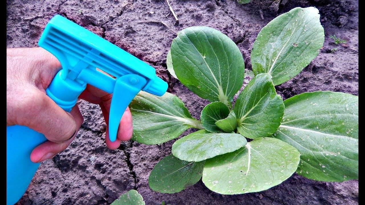 Как избавиться от мошки на капусте, эффективные средства