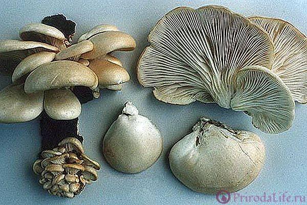 Как правильно чистить грибы