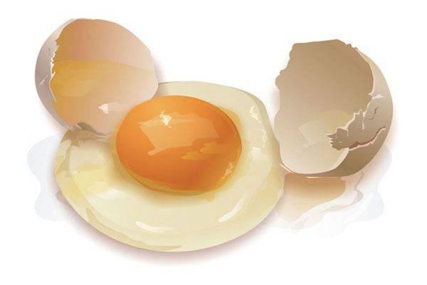 Гусиные яйца: польза и вред для организма | польза и вред