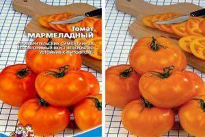 Описание сорта томата классик и его характеристики – дачные дела