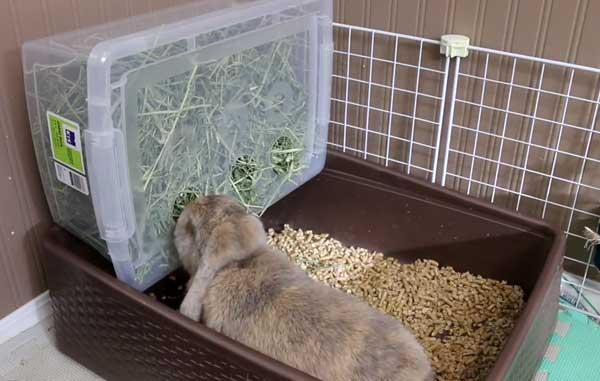Быстро и легко приучаем кролика к лотку