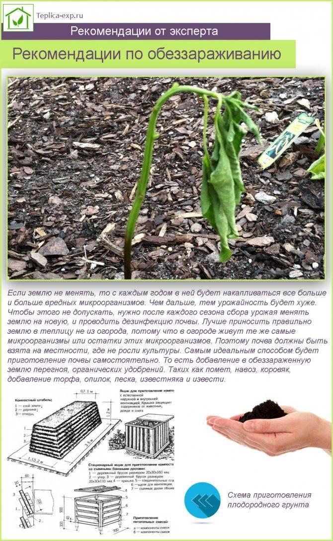 Практические советы чем обработать землю в теплице осенью и весной