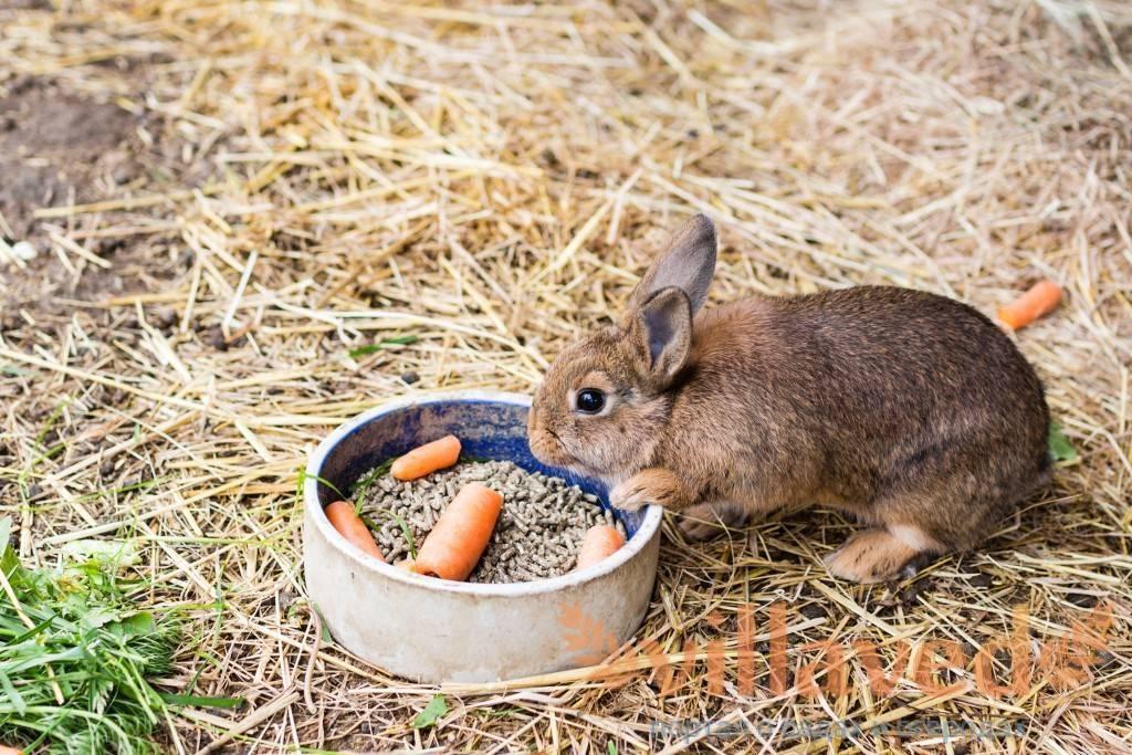 Как кормить декоративного кролика: чем кормить дома и сколько раз в день