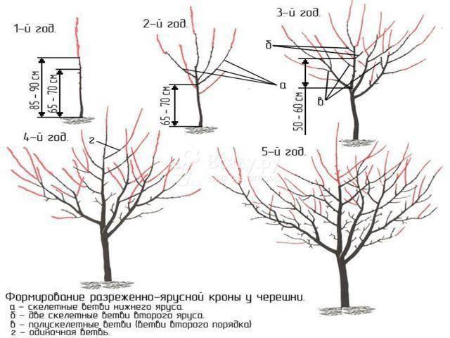 Обрезка черешни схемы и фото, сроки и виды формирования