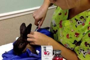 Дитрим – инструкция по применению в ветеринарии