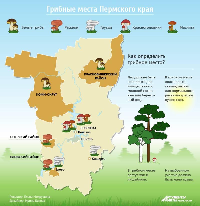 Грибы рязанской области 2021: когда и где собирать, сезоны и грибные места