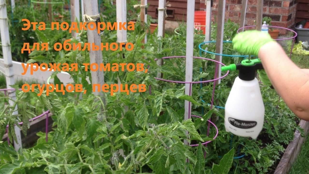 Подкормка томатов: когда и чем подкармливать помидоры во время цветения и плодоношения, как повысить урожайность