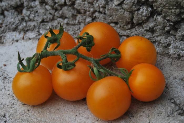 Томат марьина роща: урожайность и характеристика сорта