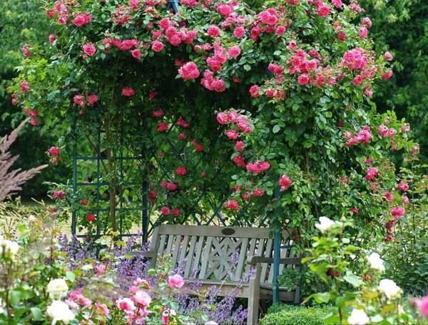 Как сделать розарий на даче своими руками: схемы устройства клумб и розариев, фото-идеи красивых цветников