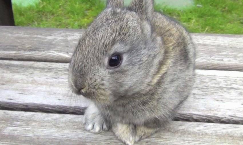 Как отличить крола от крольчихи: как различать кроликов, как определить пол