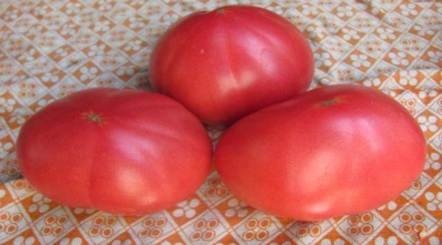 ?розовое чудо»: самый ранний и вкусный томат