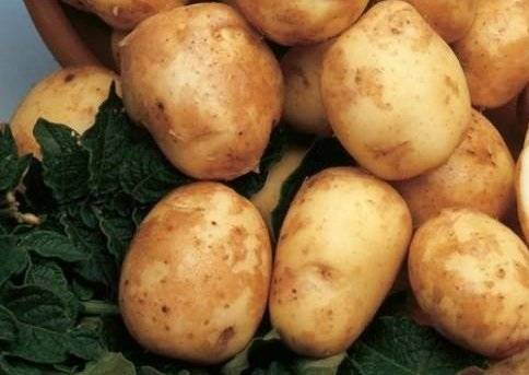 Картофель киви — описание сорта, фото, отзывы, посадка и уход