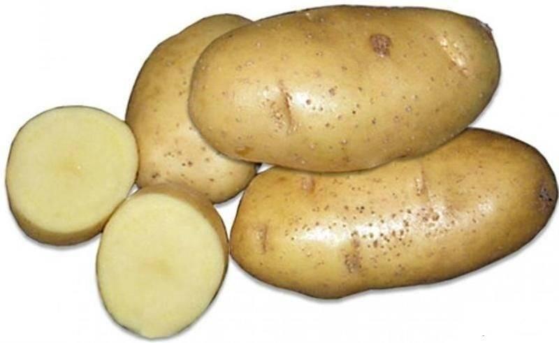 Сорта картофеля для сибири: фото и описание, названия лучших, среди которых новые ранние, хорошие скороспелые, рассыпчатые, самые урожайные западные и восточные