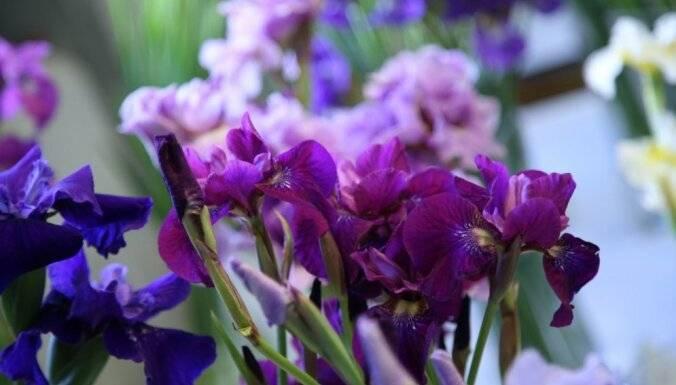 Когда лучше пересаживать ирисы — весной или осенью