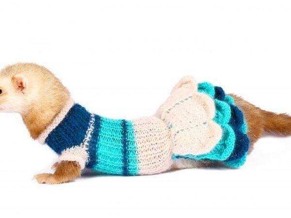 Одежда для собак своими руками - выкройки для маленьких пород с фото и видео, схема вязания
