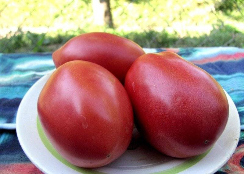 Описание раннеспелого томата розовый спам и агротехника выращивания гибрида