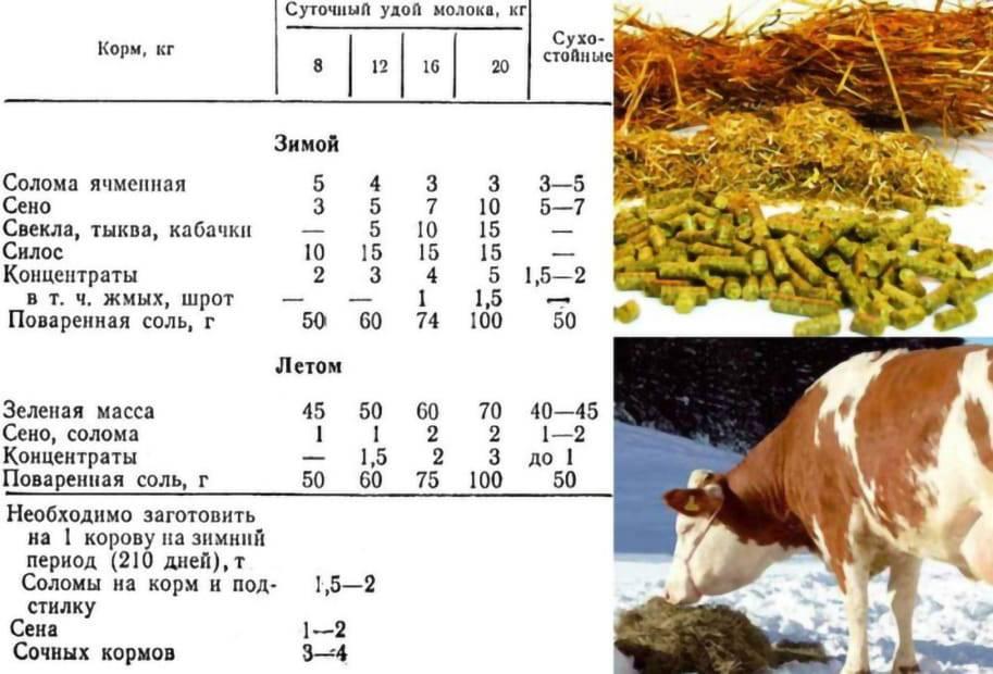 Особенности содержания дойные коров