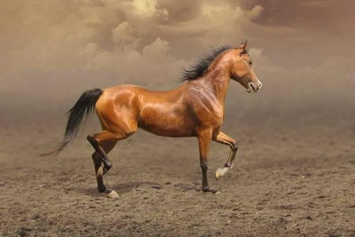Башкирская порода лошадей: фото и описание