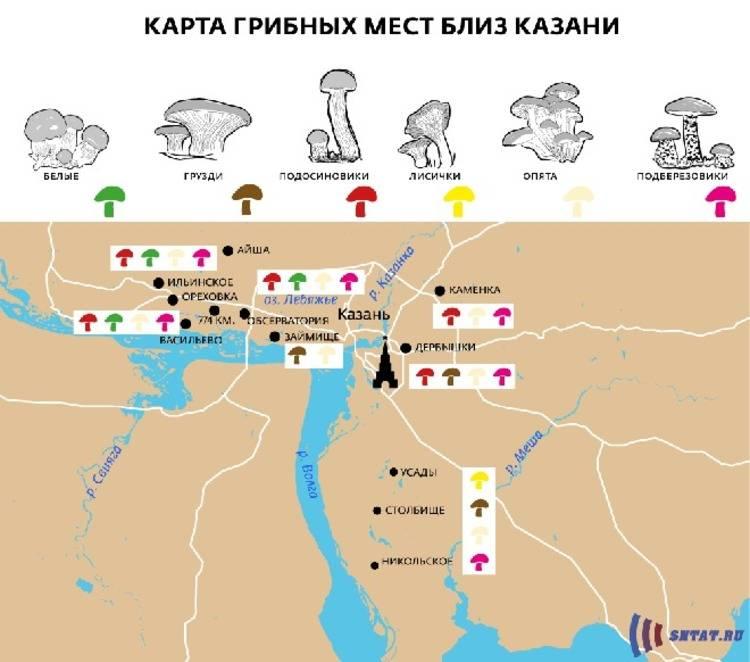 Грибы казахстана: какие грибы растут в казахстане с фото.
