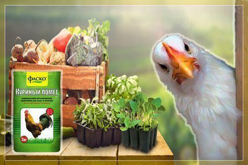 Правильное применение птичьего (куриного) помета в качестве удобрения