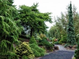 Можжевельник обыкновенный хорстманн (juniperus communis horstmann),купить можжевельник,купить можжевельник обыкновенный,продажа можжевельника,можжевельник посадка и уход,можжевельник колоновидный,хвой
