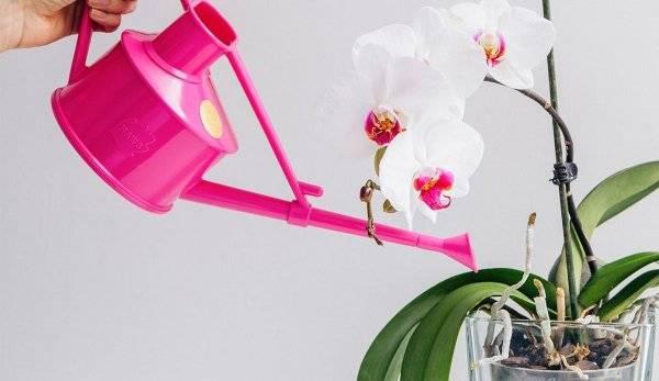 Правильный полив орхидеи во время цветения в домашних условиях