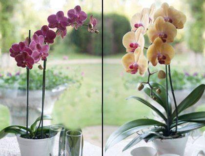 Когда орхидея отцвела, что делать со стеблем, подробнее смотрите на видео советы по действиям после цветения