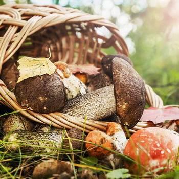 Самые ранние съедобные грибы – список, описание, фото и видео  - «как и почему»