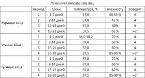 Инкубация цесариных яиц: описание, режим, таблица — selok.info
