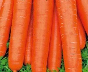 Семена моркови – лучшие сорта для открытого грунта (фото)