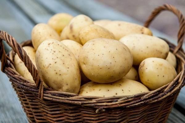 Картофель колобок: описание сорта, отзывы, фото, правила посадки, характеристика