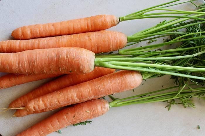 Особенности подкормки моркови и свеклы при выращивании в открытом грунте