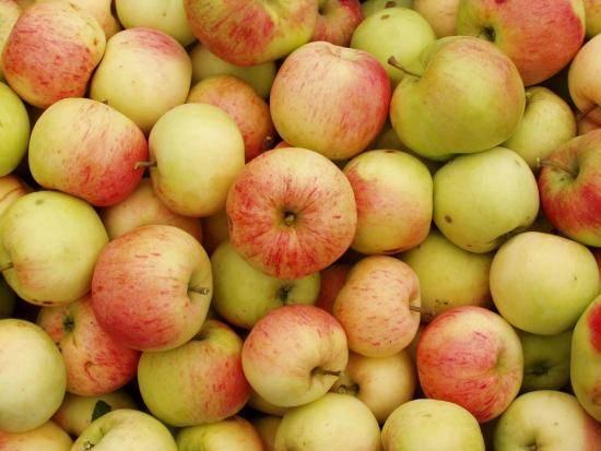 10 редких и необычных сортов яблок, которые вы не пробовали