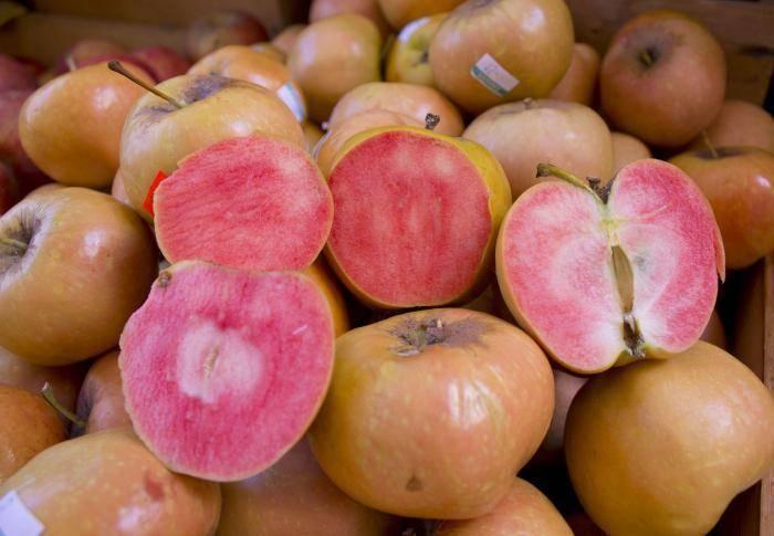 Яблоня розовый жемчуг: описание сорта, фото, отзывы