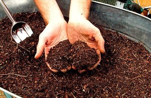 Биогумус: что это такое и как использовать для садовых и комнатных растений