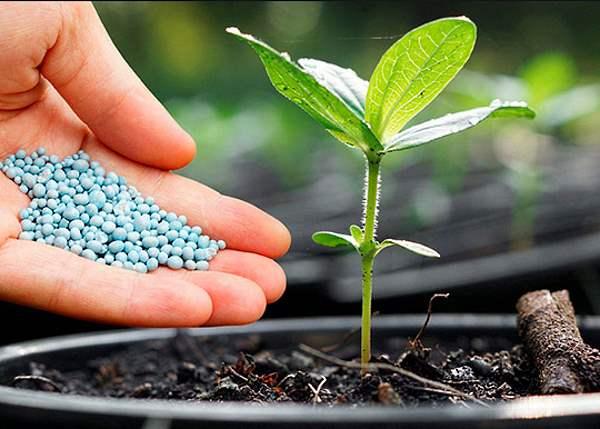 Щелочная почва: признаки и как сделать почву щелочной? какие растения любят такую почву? что это такое? что делать со слабощелочной почвой весной?