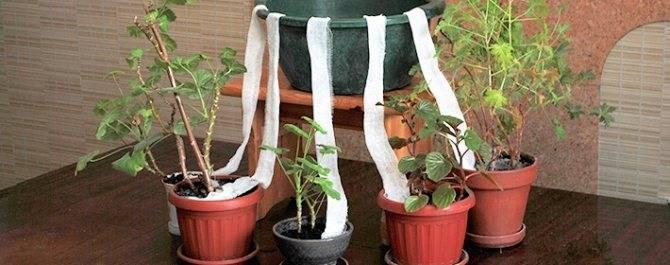 Автополив для комнатных растений — своими руками