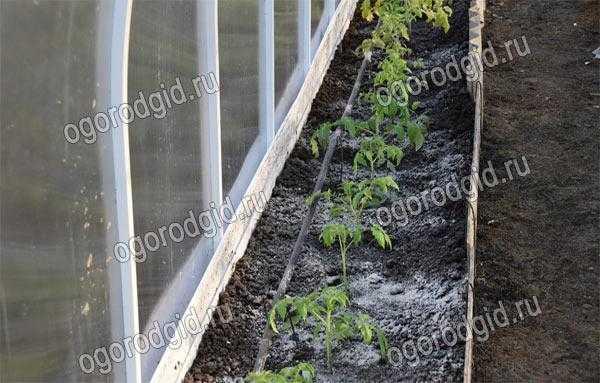 Зола в качестве удобрения: применение настоя для огорода, какие растения любят, как сделать, отзывы