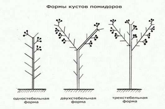 Томаты - посадка и выращивание в открытом грунте или теплице