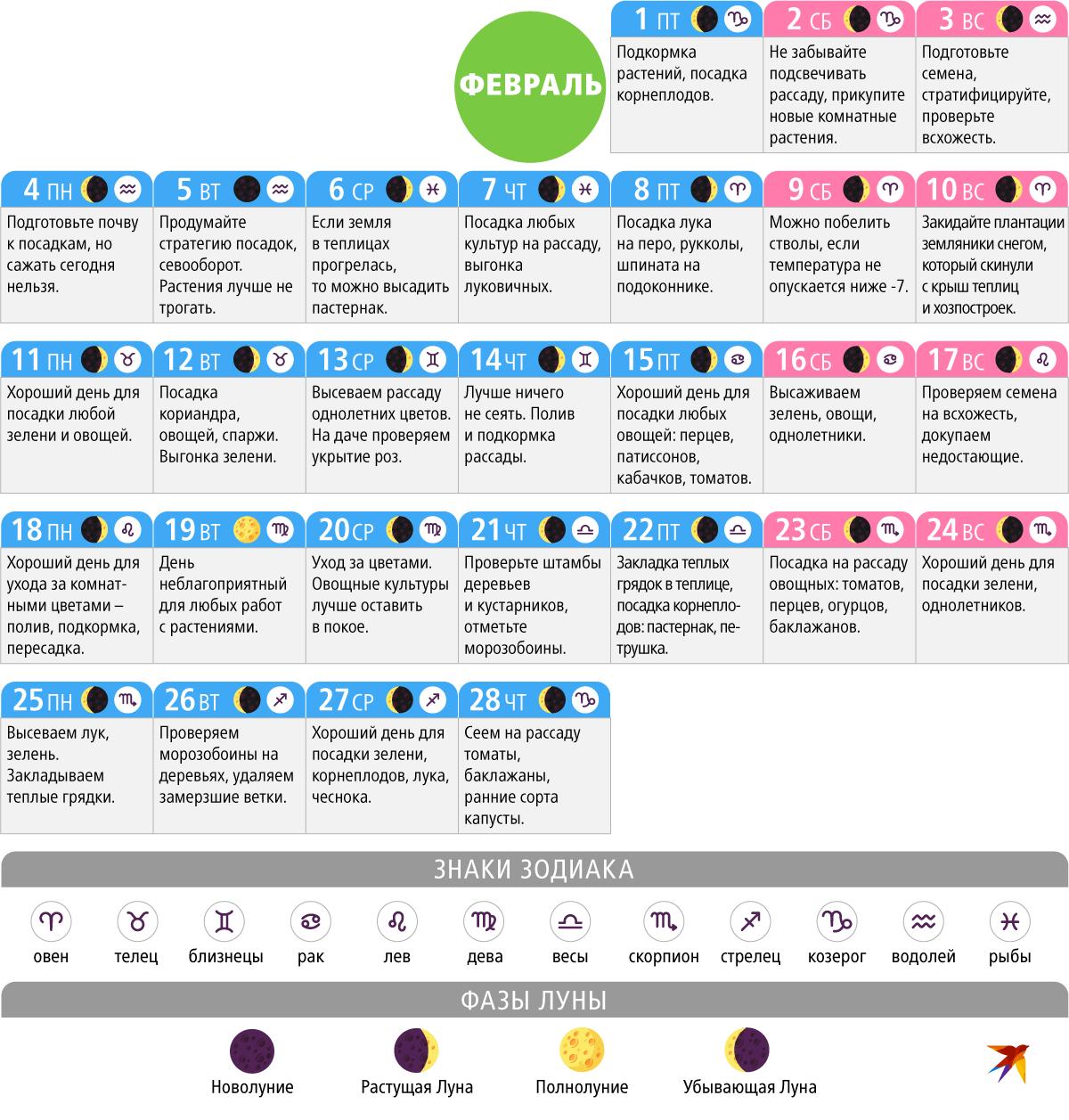Когда сажать кабачки на рассаду в 2021 году по лунному календарю в марте: выбор благоприятных дней для посева и ухода