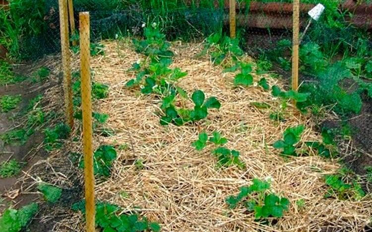 Эффективность коры сосны и лиственницы для мульчирования: плюсы и минусы использования, отличия от других видов мульчи