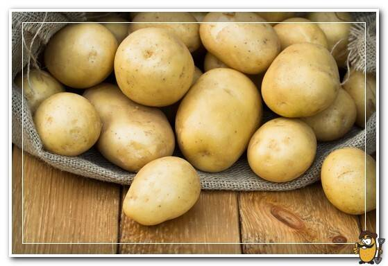 Картофель ласунок: описание сорта, характеристика, урожайность, отзывы, фото