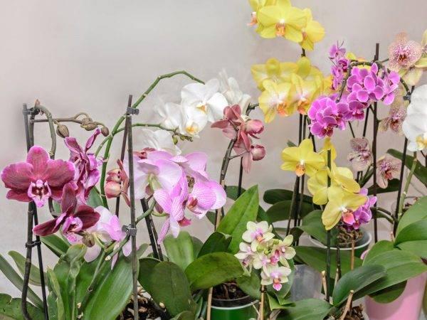 Прекрасные орхидеи в природе: как и где растут?