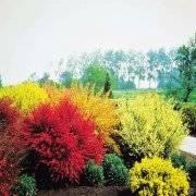 Ягода княженика — описание, где растет, посадка и уход, видео