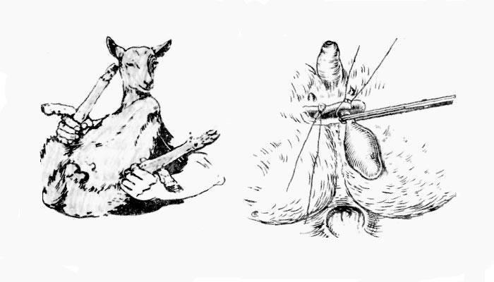 Как зарезать и разделать барана